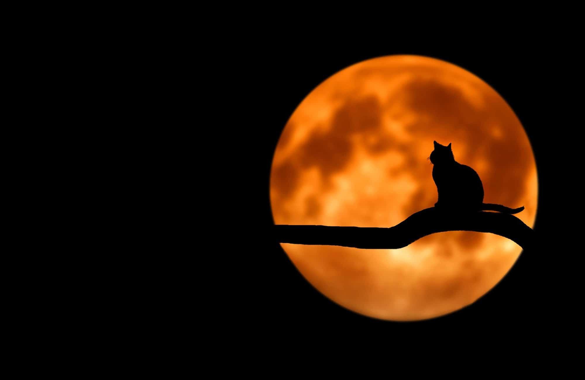 Que fait mon chat quand il reste dehors toute la nuit ?