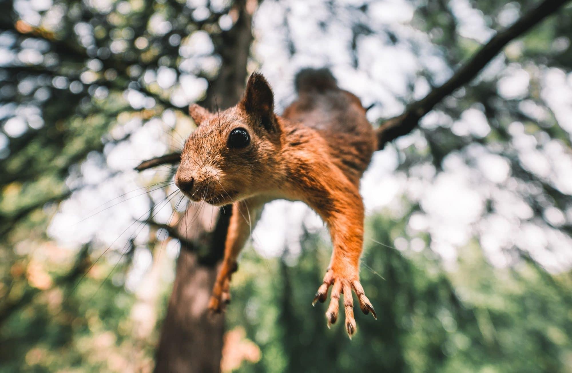 Top 12 des photos d'écureuils les plus drôles d'Instagram !