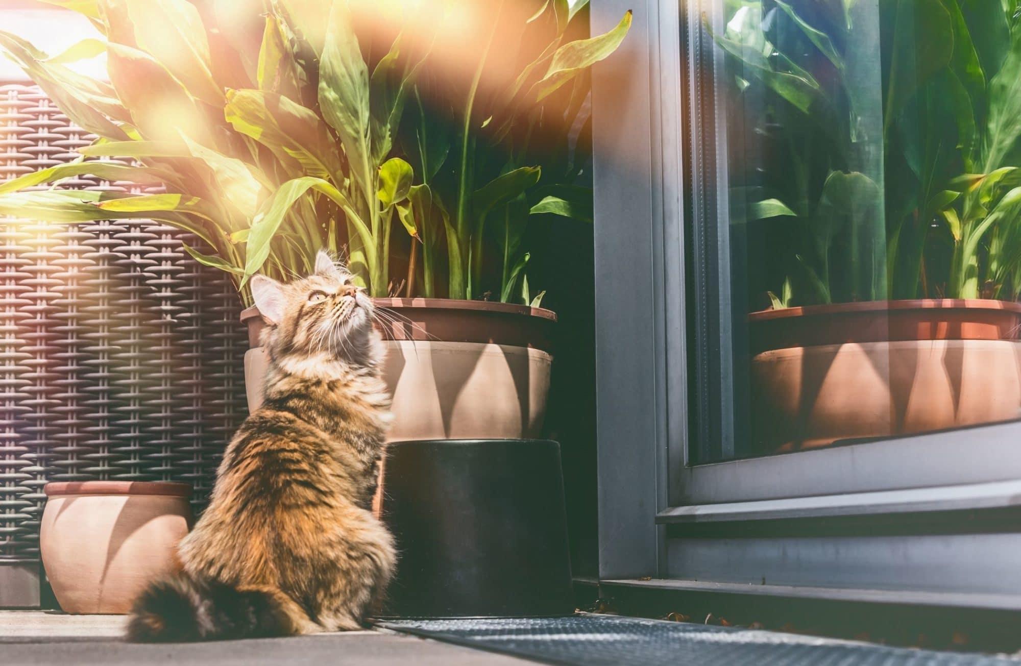 9 plantes d'intérieur toxiques pour le chien et le chat